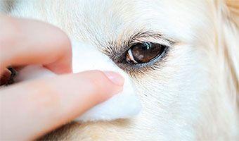 Limpieza de ojos